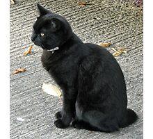 Black Cat Amid Autumn Leaves Photographic Print