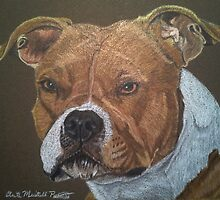 American Pit Bull Terrier by Anita Meistrell Putman