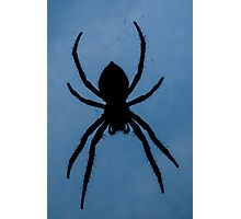Orb Weaver Silhouette Photographic Print