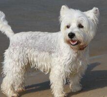"""Beach Dog """"Scotty"""" Sticker"""