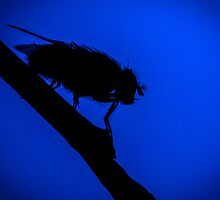 Fly Silhouette by Dave van der Wal
