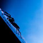 Jumping Spider, Backlit by Dave van der Wal