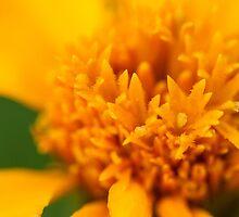 Floral by Dave van der Wal