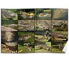 Saltwater Crocodile Poster