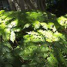 Sunlit ferns by AmandaWitt