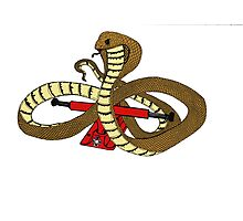 Skate Snake Photographic Print