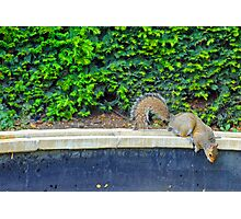 Cute squirrel looking for breakfast Photographic Print