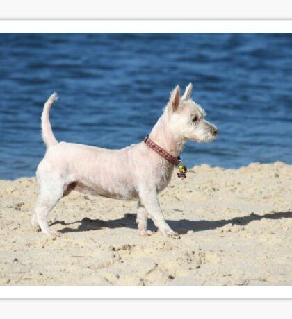 """Beach Dog """"Tudie"""" Sticker"""