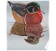 """""""Wood duck"""" Poster"""