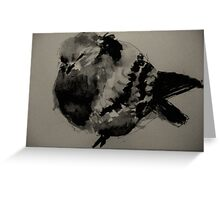 fat pigeon Greeting Card