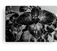 Leaves - B&W    ^ Canvas Print