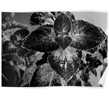 Leaves - B&W    ^ Poster