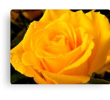 Yellow Rose of Texas     ^ Canvas Print