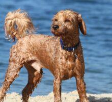 """Beach Dog """"Scamper"""" Sticker"""