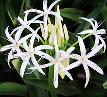 Spider Lilies 1 by Dawn Eshelman