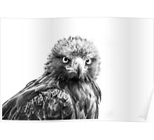 Golden Eagle, Mono. Poster