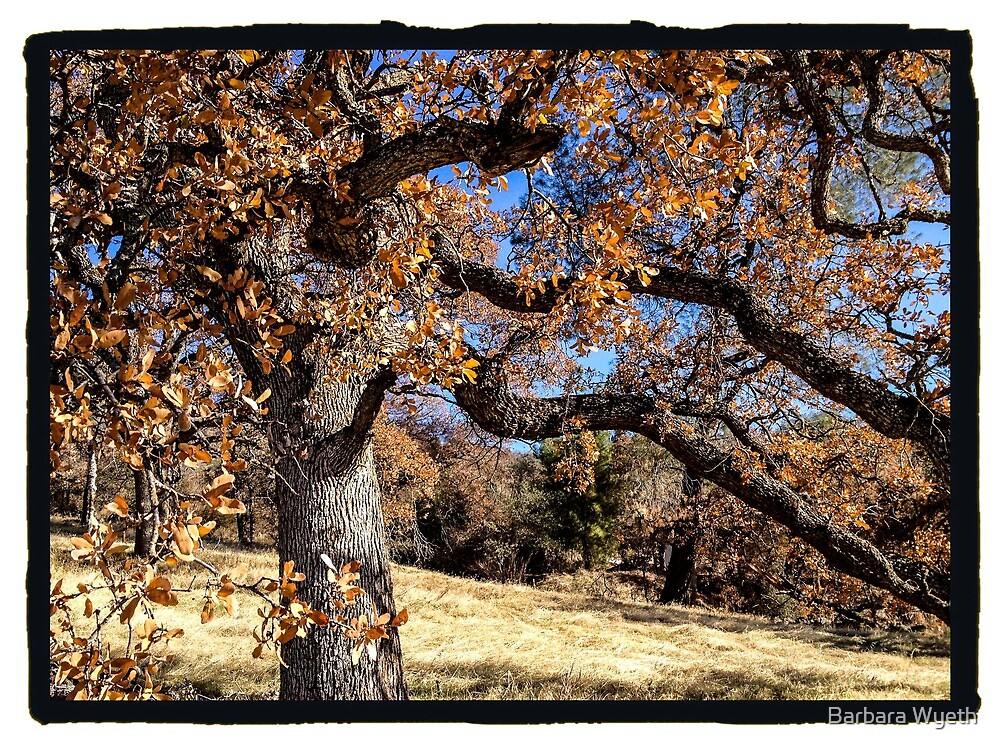 Oak, Gold Country by Barbara Wyeth