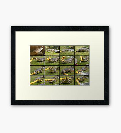 Saltwater Crocodiles Framed Print