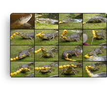Saltwater Crocodiles Canvas Print