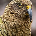 Kea by srhayward