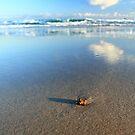 Calm Morning Swim by David Gallagher