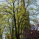 Episcopal Cathedral in Edinburgh visible through trees by ashishagarwal74