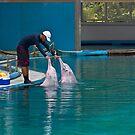 Trainer patting the dolphins  by ashishagarwal74