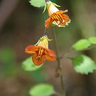 Taurepo Flower by lezvee