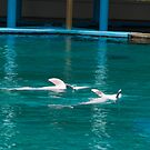 Dolphins swimming upside down by ashishagarwal74