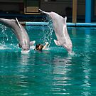 2 dolphins jumping over female trainer by ashishagarwal74