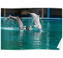 2 dolphins jumping over female trainer Poster