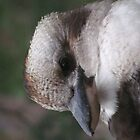 Kookaburra iPad Case by Derwent-01