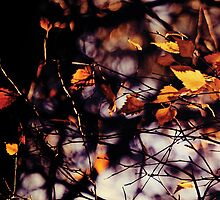 Autumn I by Anne Staub