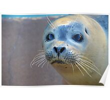 Rescued seal pup Poster