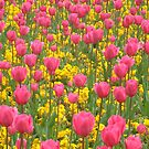 Field of pink and yellow flowers by Peter Barrett