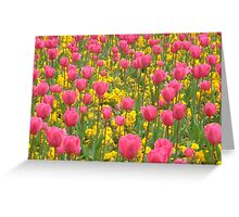 Field of pink and yellow flowers Greeting Card