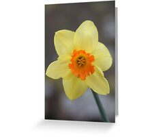 Yellow Daffodil Flower Greeting Card