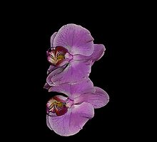 Cellphone Case Orchid Flower 6 by Gotcha29