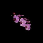 Cellphone Case Orchid Flower 8 by Gotcha29