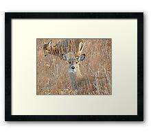 White tail deer in the brush Framed Print
