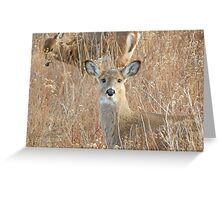White tail deer in the brush Greeting Card