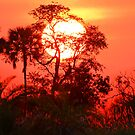 Sunrise in the Okavango Delta by jozi1