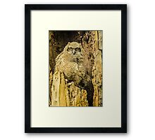 Baby Great Horned Owl - The Stare Framed Print