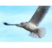 Soaring gull Photographic Print