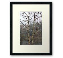 Sycamore Lake Framed Print