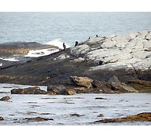 Cormorants on the rocks Photographic Print