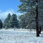 Arizona Snow by Alex Rentzis
