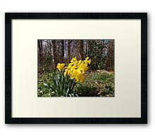 Yellow Daffodils Framed Print