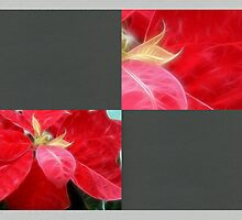 Mottled Red Poinsettia 2 Blank Q6F0 by Christopher Johnson
