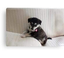 Husky Puppy on a Couch Canvas Print